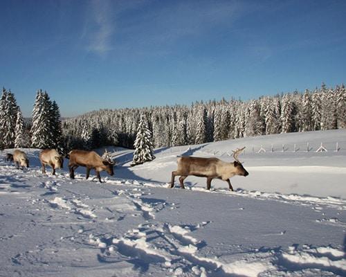 Location de gîte Lac Saint Point vacances dans le haut Doubs : à découvrir dans la région le Parc Polaire